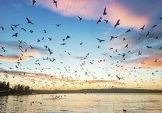 Birds fly sunset Oscean Stock Photography