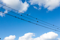 Birds fly to free in to the sky Royalty Free Stock Photography