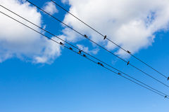 Birds fly to free in to the sky Royalty Free Stock Photo