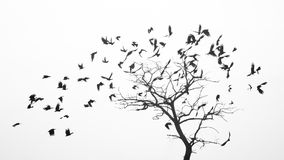 Birds fly from the tree like leaves by the wind.  Royalty Free Stock Photos