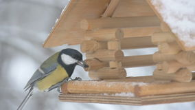 Birds fly up to the feeder and take the grain and fly, macro photography, snowflakes falling on the birdhouse