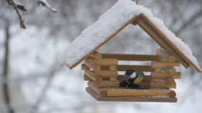 Birds fly up to the feeder and take seeds, snow on trees, falling snowflakes for the birdhouse. Birds, bird, snow, winter snowflakes falling on the birdhouse stock footage