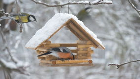 Birds fly up to the feeder and take seeds, snow on trees, falling snowflakes for the birdhouse. Birds, bird, snow, winter snowflakes falling on the birdhouse stock video footage