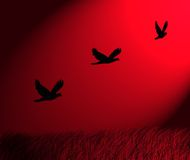 Birds flying. Illustration of byrds flying on a red background Royalty Free Stock Images