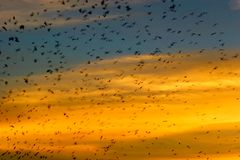 Birds flying. Abstract scene of birds flying at dusk stock photography