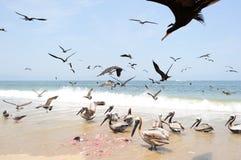 Free Birds Flying Stock Image - 81701451