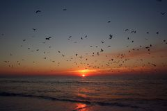 Birds flying above the sea royalty free stock photography
