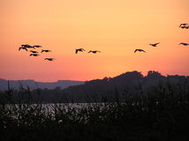 Birds flying across a burning sky Royalty Free Stock Image