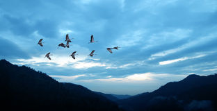 Birds flying against blue evening sunset environment or ecology Royalty Free Stock Image