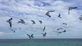 Birds. Flying in the air in slow motion stock footage