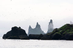 Birds flying around famous cliffs. South Iceland Royalty Free Stock Photography