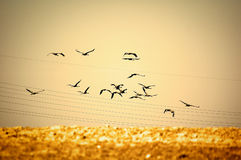 Birds flying away Royalty Free Stock Images