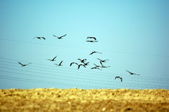 Birds flying away Stock Photography
