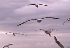 Birds Flying Away Royalty Free Stock Photos