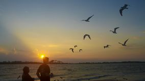 Birds flying at the beach. royalty free stock images