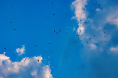Birds flying in the blue sky Stock Image