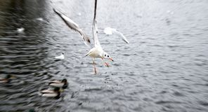 Birds Flying on Body of Water during Daytime Royalty Free Stock Image
