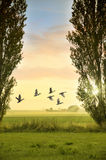 Birds flying in countryside Royalty Free Stock Images
