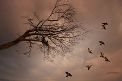 Birds flying with dead tree Royalty Free Stock Images