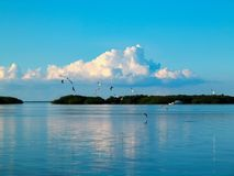 Birds flying and diving and fishing on the water in bay with fluffy clouds tinged pink in very blue sky reflecting in the sti stock photography