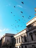 Birds Flying. In front of the MET museum Royalty Free Stock Photos