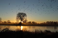 Birds flying in front of the sun rise stock photo