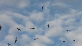 Birds  flying high in the blue sky stock footage