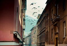 Birds flying in a historic narrow street stock images