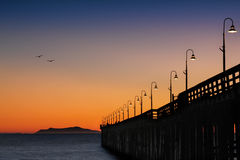 Birds flying home at sunset by the Pier Stock Images
