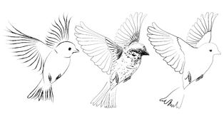 Birds flying. Illustration of 3 birds flying, vector Royalty Free Stock Images