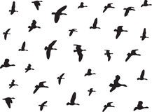 Birds flying Stock Photo