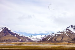 Birds flying between mountains in arctic summer landscape Royalty Free Stock Photography