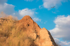 Birds are flying near mountain. Stock Image