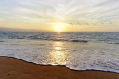 Birds Flying Ocean Sunset. Is a flock of birds flying toward the bright peaceful sun on the ocean horizon Stock Photos