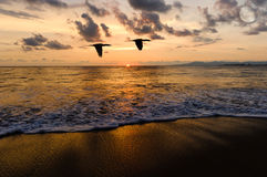 Birds Flying Ocean Sunset Silhouettes. Is two seabirds flying over the water as the sun sets on the colorful ocean horizon Royalty Free Stock Photo