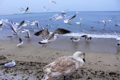 Birds flying off beach Stock Photo