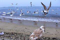 Birds flying off beach Stock Image