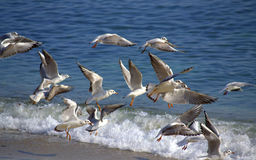 Birds flying out beach. Picture taken on November,2013 Freedom to move royalty free stock images