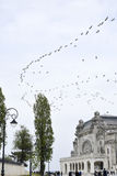 Birds flying over Constanta Casino Royalty Free Stock Photography