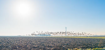 Birds flying over a field in sunlight Stock Photos