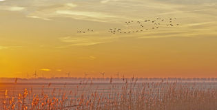 Birds flying over in a field at sunrise Royalty Free Stock Image