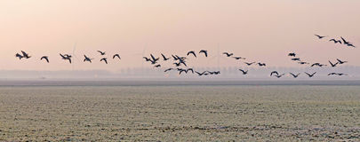 Birds flying over in a field at sunrise Royalty Free Stock Photos