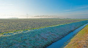Birds flying over a frozen field in winter Royalty Free Stock Photos