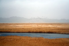 Birds flying over the highland marsh Stock Images
