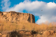 Birds flying over hill. Stock Images