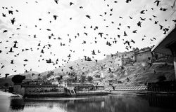 Birds flying over India Fort. In black and white Stock Images
