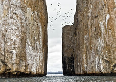 Birds Flying over Kicker Rock, Galapagos Royalty Free Stock Photos