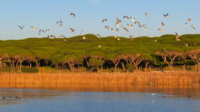 Birds flying over lake in green field Royalty Free Stock Photo