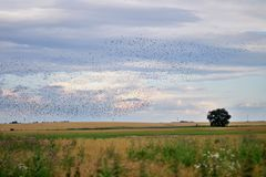 Birds flying over a landscape Stock Photography
