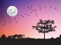 Birds flying over the moon and tree silhouette in twilight sunset Royalty Free Stock Photography